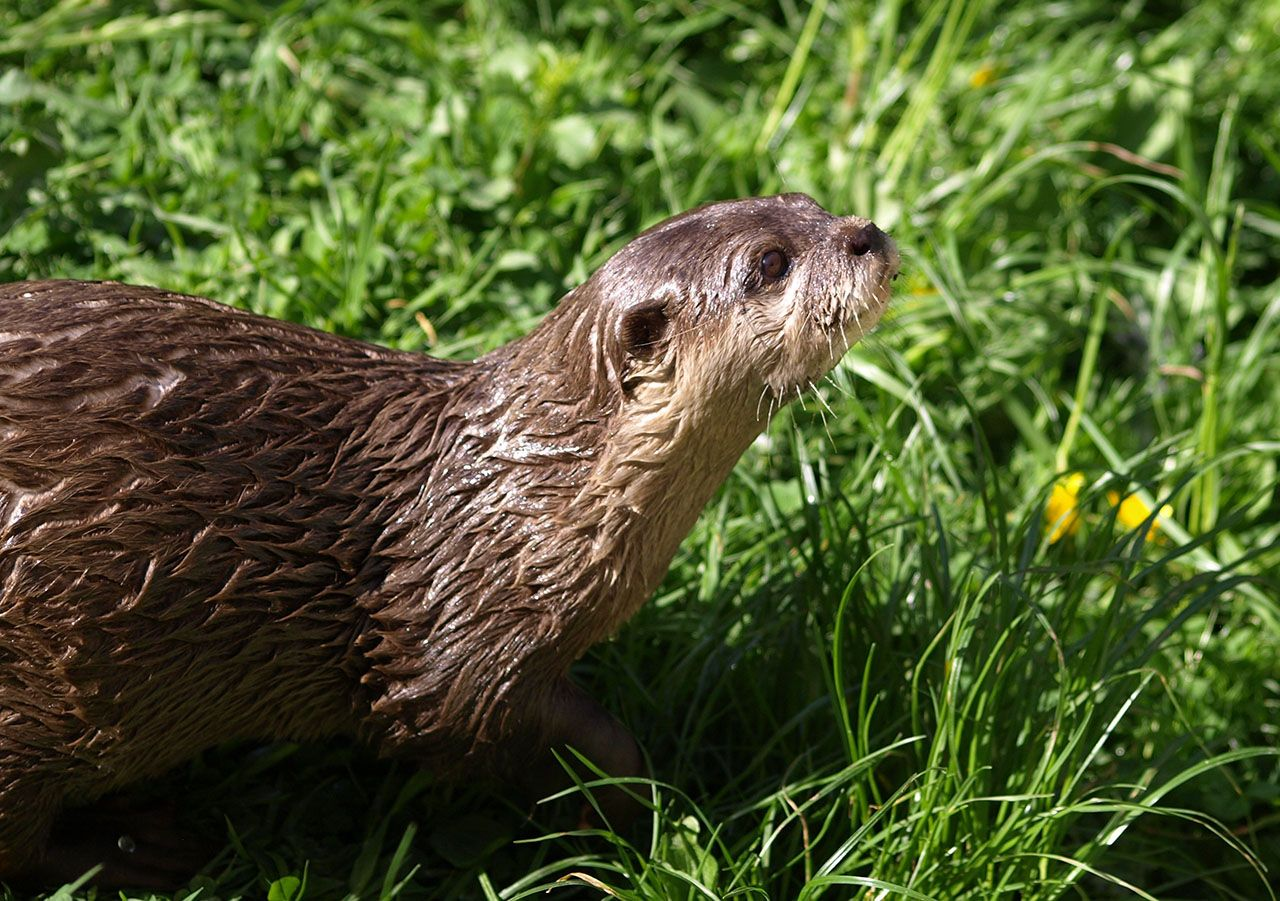 happy-world-otter-day