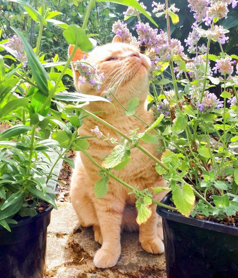 cats-are-really-enjoying-their-catnip-gardens-%f0%9f%8c%bf%f0%9f%90%b1%f0%9f%8c%bf