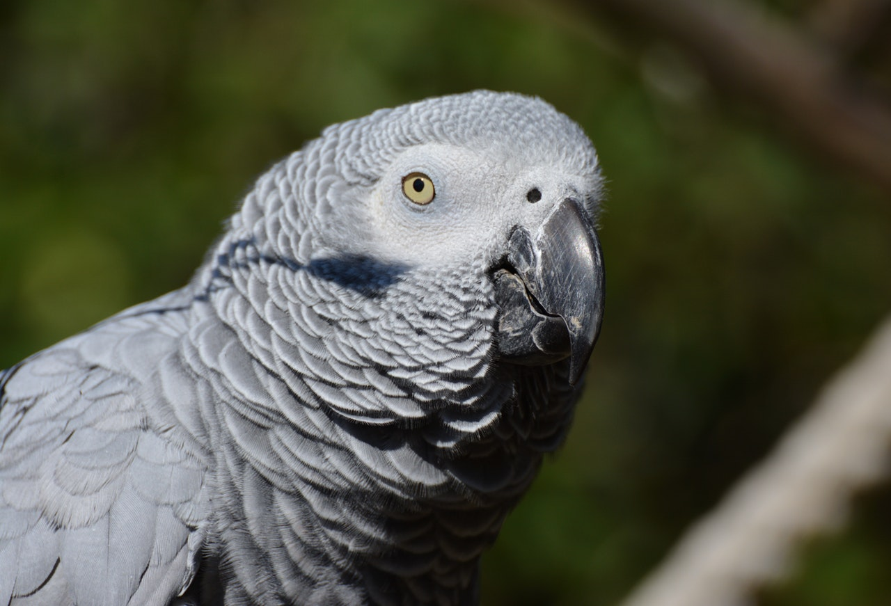 Meet Barney: A Parrot of Many Hilarious Talents