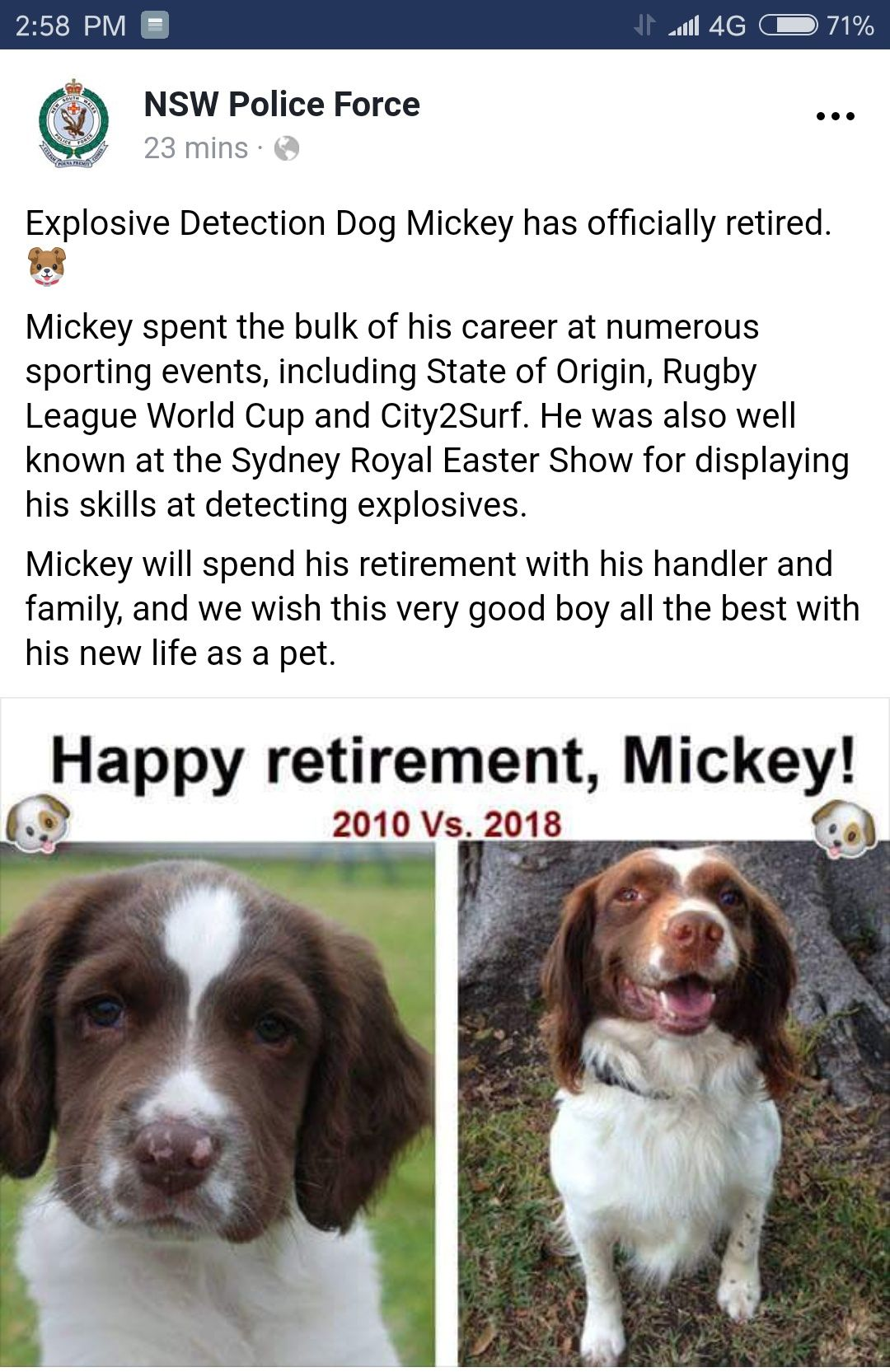 explosive-detection-dog-mickey-has-officially-retired-%f0%9f%90%b6