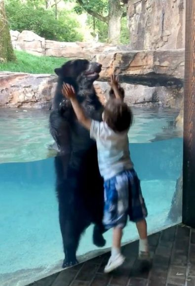 a-bear-and-a-boy-jump-in-unison-at-the-nashville-zoo-%f0%9f%90%bb