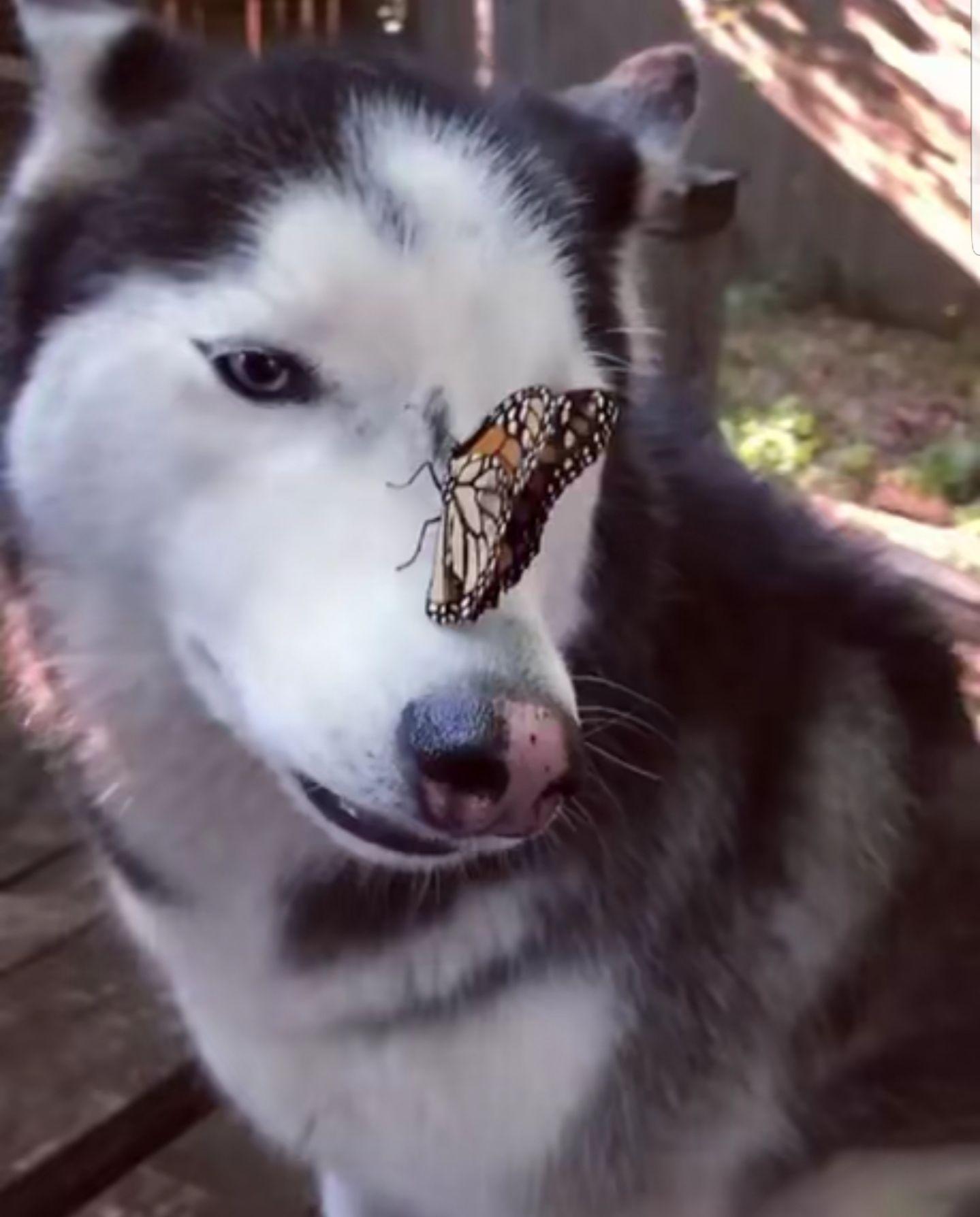 random-animal-cuteness-2