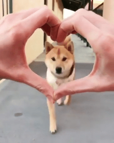 random-animal-cuteness