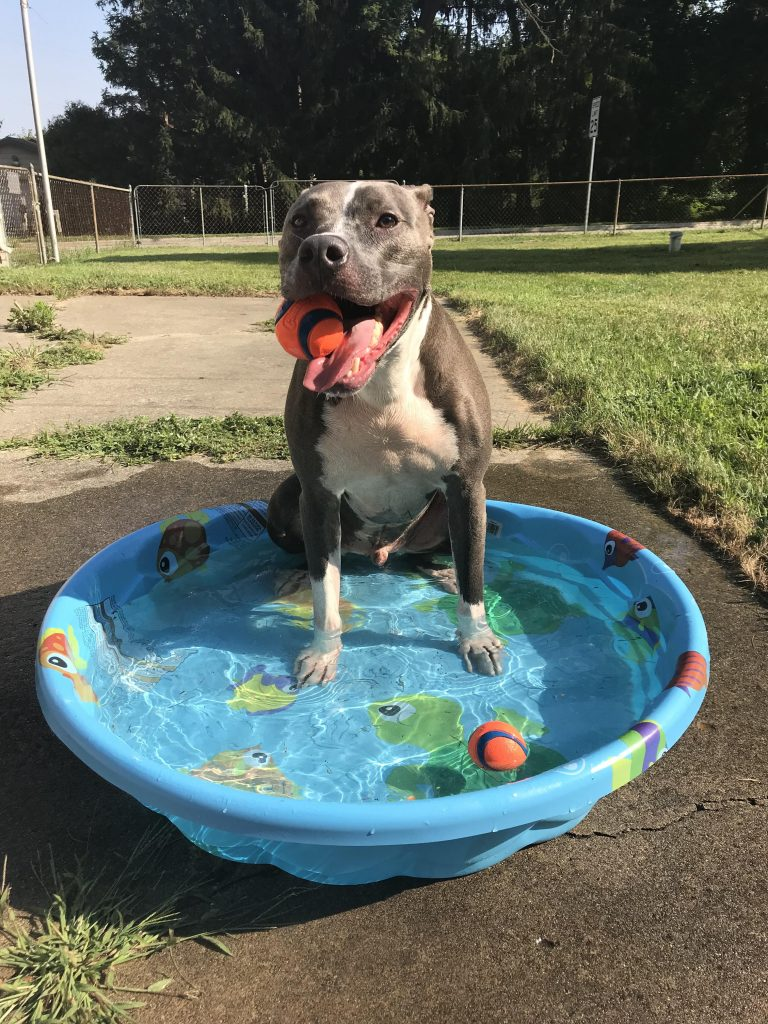 Summer doggie fun time!