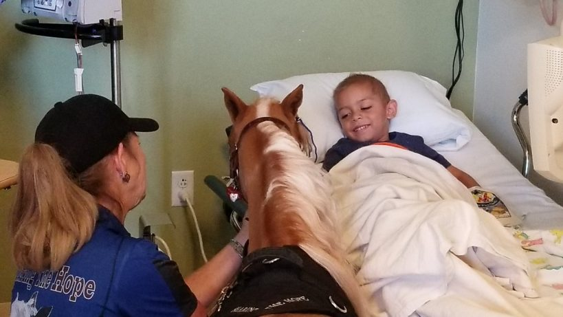 miniature-horse-named-hope-visits-children-in-california-hospital