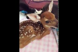 the-worlds-cutest-baby-animal-petting-zoo