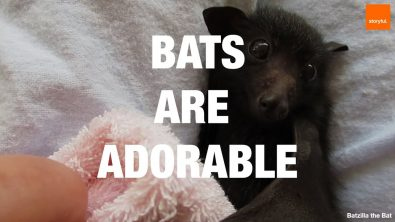 bats-are-adorable