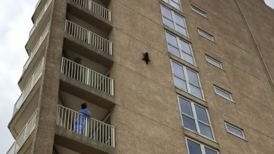 stunt-raccoon-scales-apartment-building-only-to-leap-off-and-float-to-the-sand-below