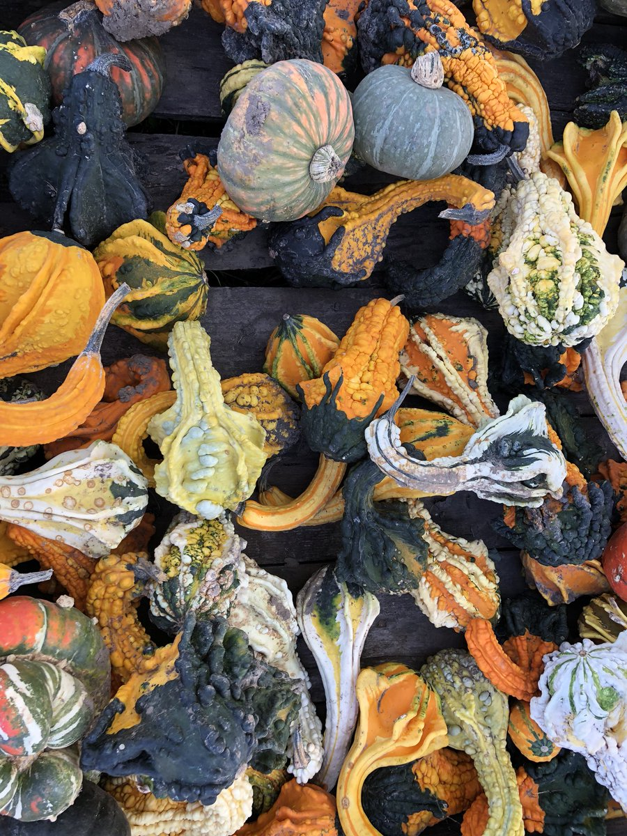 it-is-officially-decorative-gourd-season