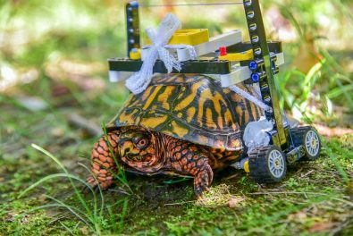 injured-turtle-gets-a-custom-lego-wheelchair-%f0%9f%90%a2