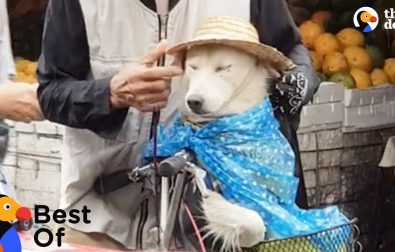 dog-protected-from-rain-and-funniest-animal-videos