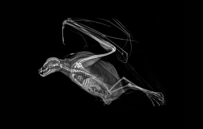 zoo-shares-gothy-x-ray-images-of-animals-taken-during-health-checks