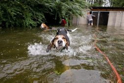 hero-volunteer-saves-6-trapped-dogs-during-hurricane-florence