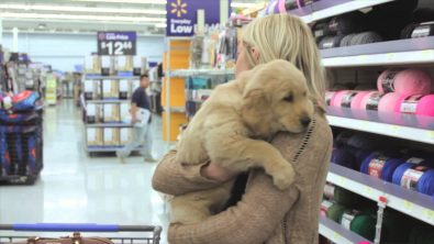 puppy-shopping