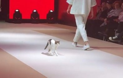 cat-invades-fashion-show-and-teaches-models-how-to-strut