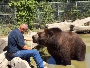 a-couple-raises-orphaned-bears-and-it-is-pawsitively-adorable-%f0%9f%90%be