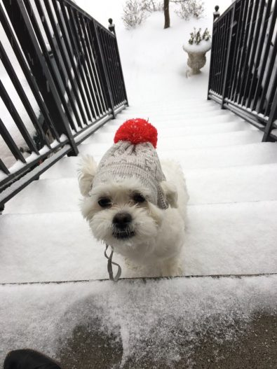 these-puppies-just-discovered-snow-for-the-first-time