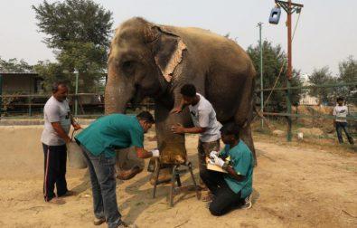 indias-first-elephant-hospital-opens-%f0%9f%90%98