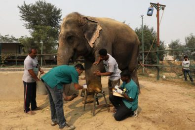 indias-first-elephant-hospital-opens-%f0%9f%90%98