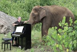 man-plays-piano-for-elephants-at-sanctuary