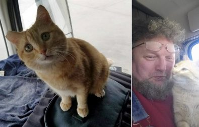 cat-becomes-traveling-buddy-to-trucker-who-rescued-him