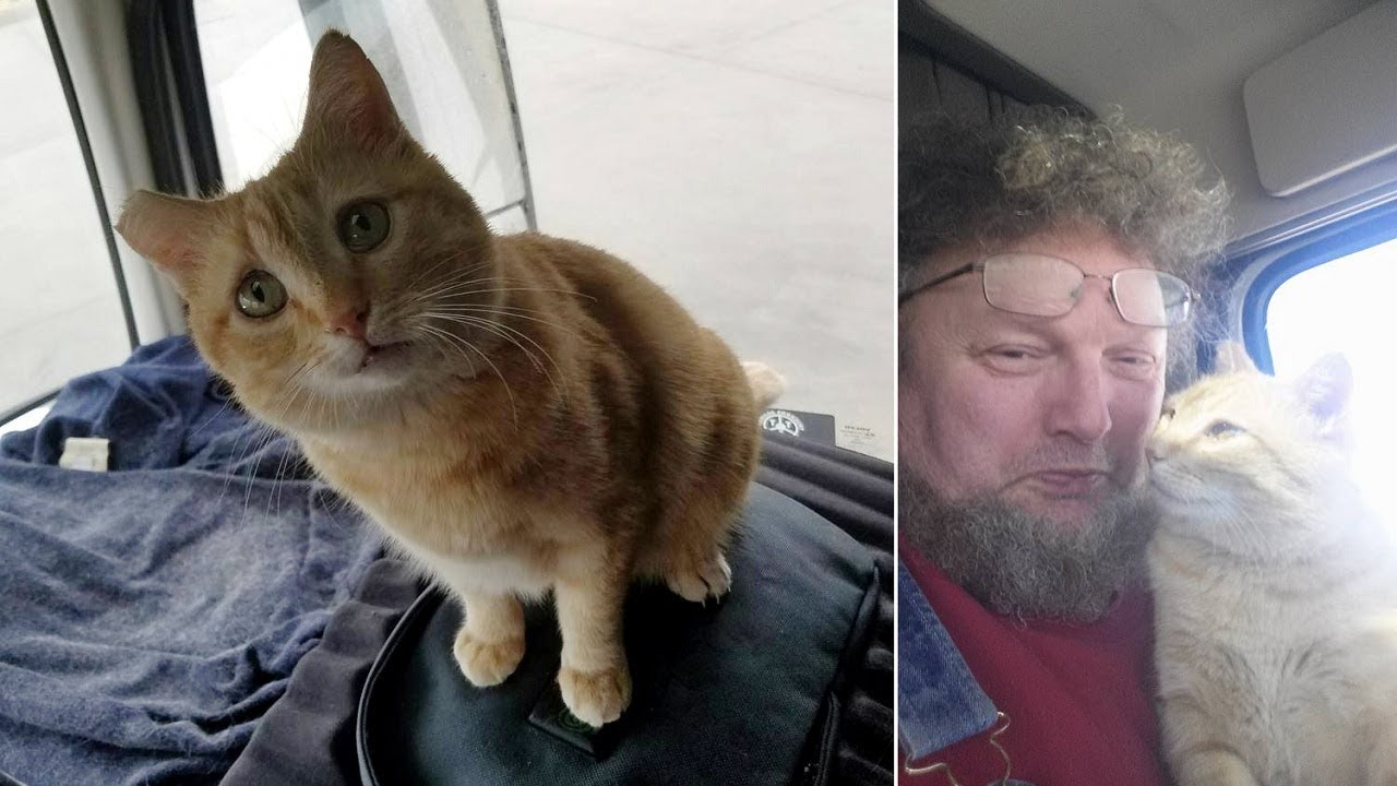 Cat Becomes Traveling Buddy To Trucker Who Rescued Him