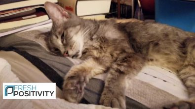 elderly-cat-sleeps-and-dreams-with-her-eyes-open