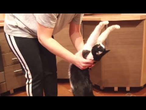 Cat Loves To Get Hugs And A Little 'Pick Me Up'