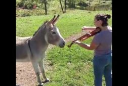 donkey-loves-the-sound-of-the-violin-and-joins-in-by-singing