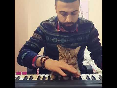 Cat Plays The Piano While Napping