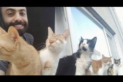 playing-piano-with-rescued-cats-never-gets-old
