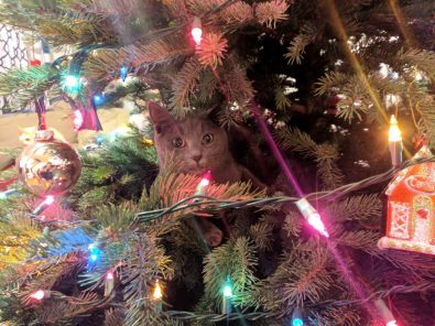 can-you-spot-these-cats-in-the-christmas-trees