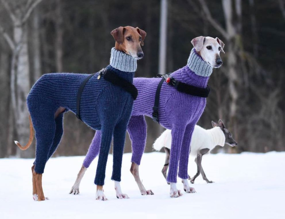 these-fancy-looking-dogs-in-matching-turtlenecks-inspired-numerous-captions