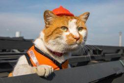 meet-the-cat-construction-site-supurrviser