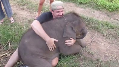 baby-elephants-love-to-make-friends-and-cuddle