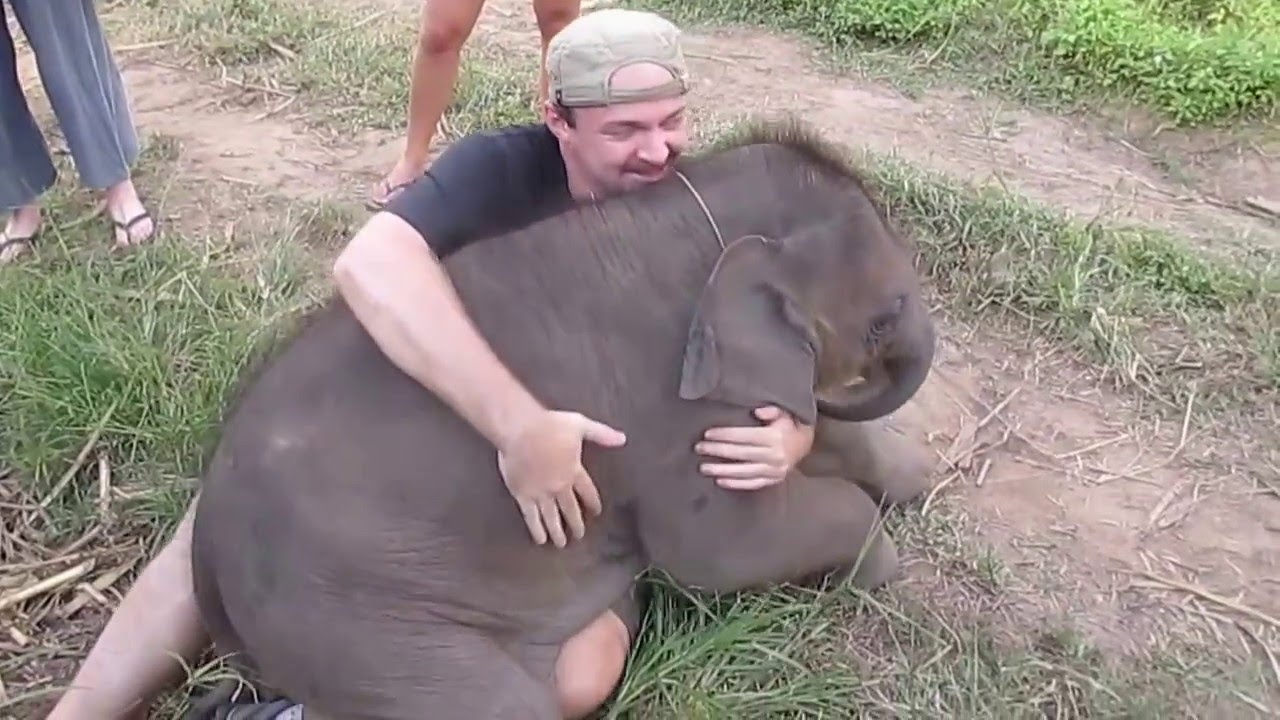 Baby Elephants Love To Make Friends And Cuddle