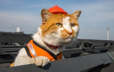 meet-the-cat-construction-site-supurrviser