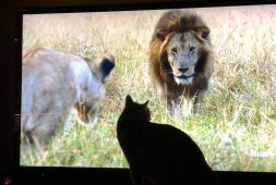 little-lions-enjoy-dynasties-on-bbcamerica