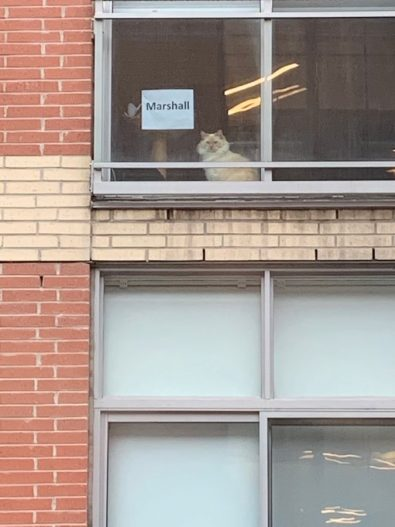 when-you-work-across-the-street-from-a-cat-and-want-to-know-its-name