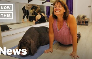 yes-people-do-yoga-with-pigs