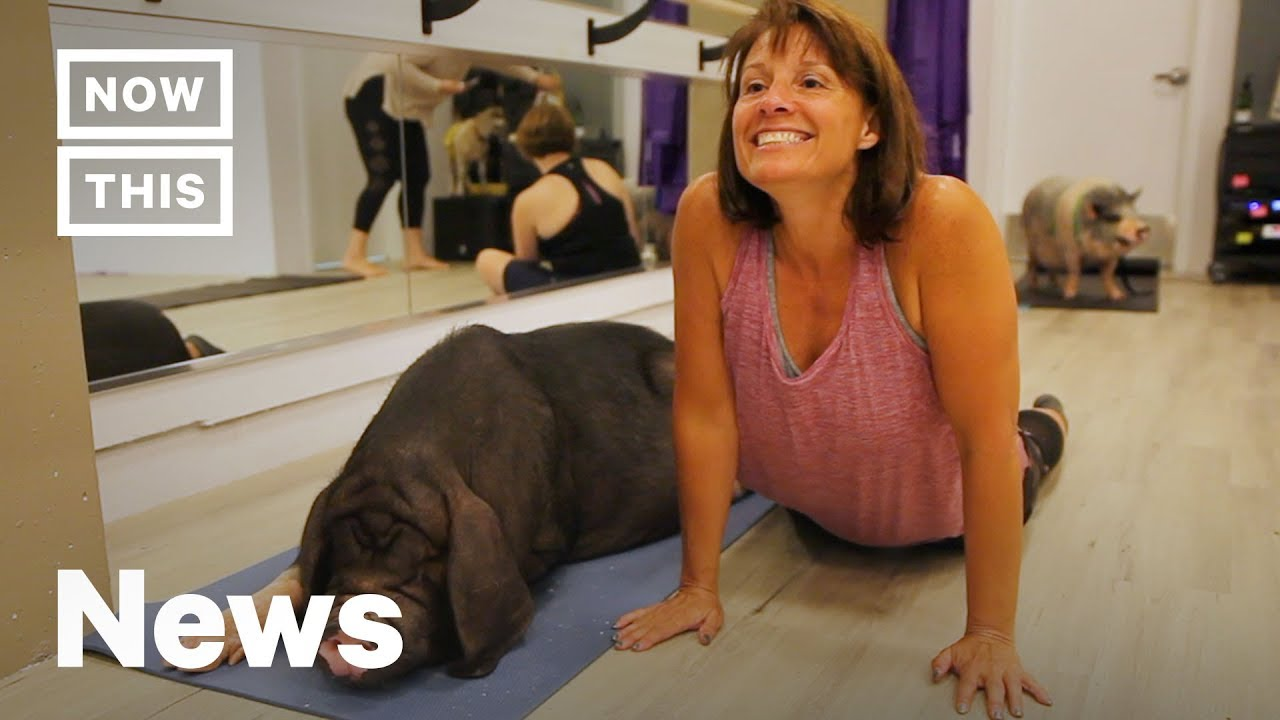 Yes, People Do Yoga With Pigs