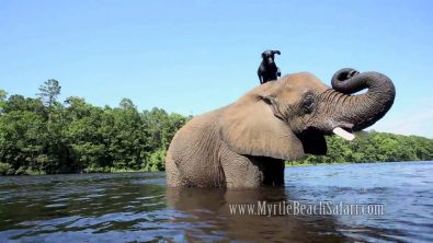 best-friends-in-the-world-dog-and-elephant