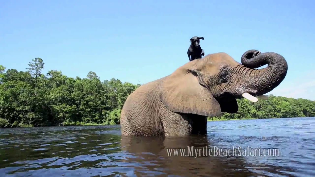 Best Friends In The World - Dog And Elephant