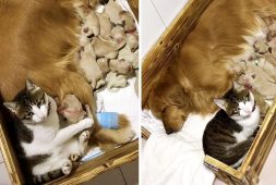 cat-comforts-her-dog-best-friends-new-puppies