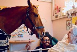 peyo-the-loving-stallion-visits-sick-people