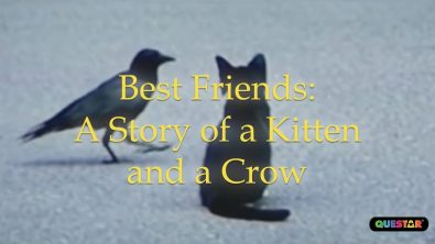 best-friends-the-story-of-a-crow-and-a-kitten