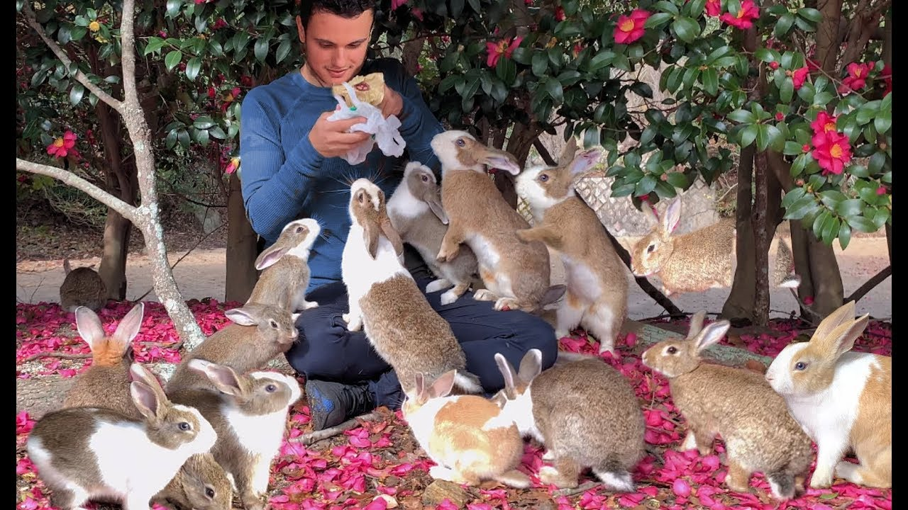 Tour Of Rabbit Island By Rabbit Expert