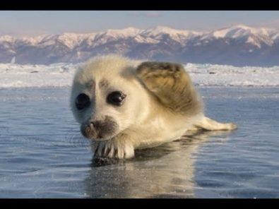 the-cutest-wild-baby-animals