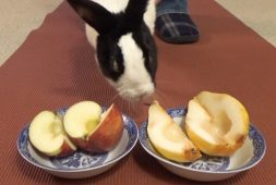 will-the-bunny-choose-a-pear-or-an-apple