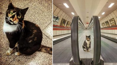 cat-is-enjoying-life-being-a-greeter-at-the-train-station